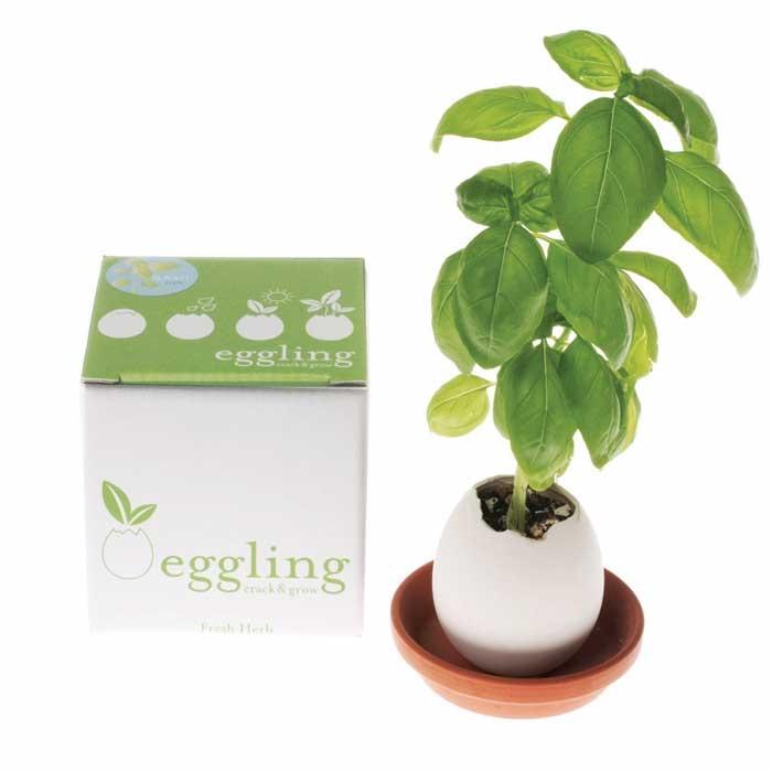 eggling_box