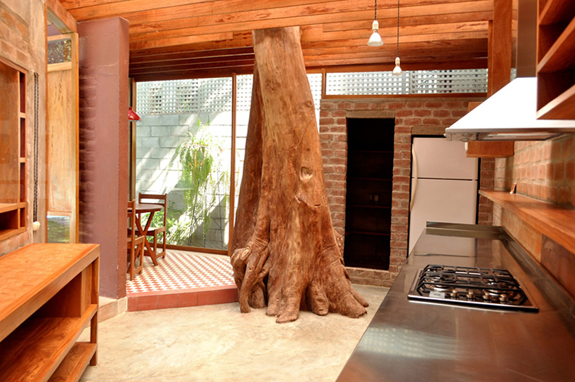 tree in kitchen 1