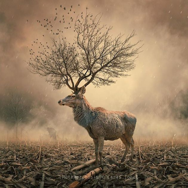 Caras-Ionut-dream-like-photos14