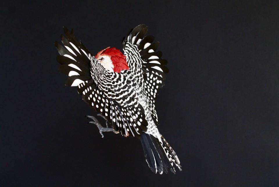 paper bird 7