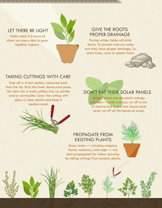The-Herb-Growers-infographic